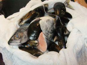 Снимка 10 от рецепта за Рибена чорба `Ники`